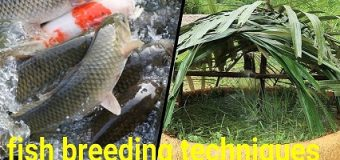 How to help fish to reproduce